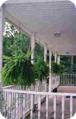 Hanging ferns on the porch, a Southern tradition. Ferns like humidity indirect sunlight.