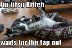 Jiu-Jitsu Kitteh!
