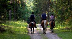Paseos a caballo.