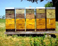 Honeybees don't sting unless provoked. In fact, they don't want to sting because then they will die.