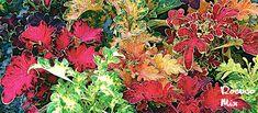Palettblad Flowers, Royal Icing Flowers, Flower, Florals, Floral, Blossoms