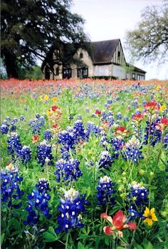 A Field of Texas Wild Flowers by Karen Roie Forest