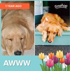 MY DOG IS SO FRIGGIN CUTE THEN, AND NOW! *LAINEY*