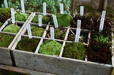 46 Unique Ways To Decorate Your Small Garden - Design Moss Garden, Garden Trellis, Garden Soil, Garden Plants, Moss Terrarium, Terrariums, Paludarium, Vivarium, Moss Plant