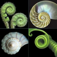 One of God's best designs in nature....the spiral!