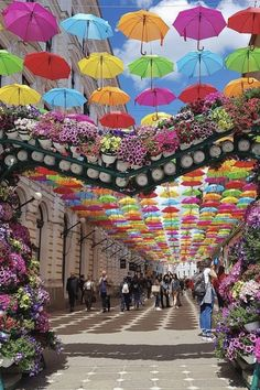 Timisoara, Romania #smile #world #explore #stunning  Timisoara Romania, Bucharest Romania, Places To Travel, Places To See, Strange Flowers, Romania Travel, Europe, Travel Abroad, Amazing Art