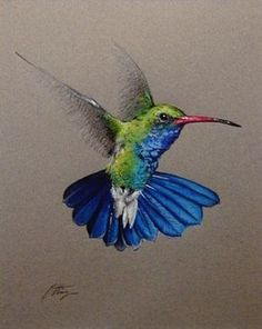 pencil+drawings+of+hummingbirds | Southwest Plant and Wildlife #BeautifulDrawings