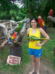 Xcaret, Riviera Maya, Cancún, Quintana Roo, México   Papagay/ Gaucamaya