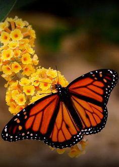 Butterfly by Bena Travis