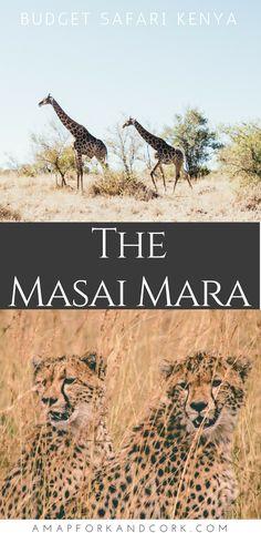 Ultimate guide to planning a safari on a budget in the Masai Mara. #Safari #Kenya #Africa #Masaimara