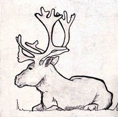 Reindeer/rendier. www.suzanvdberg.nl