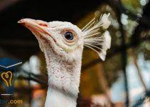 موضوع تعبير عن التنمر والتصدي لهذه الظاهره 6 Bald Eagle Animals Eagle