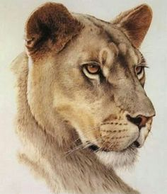 Cat Portraits by Guy Coheleach – Guy Coheleach's Animal Art - Pfeil Tattoo Big Cats Art, Cat Art, Animal Sketches, Animal Drawings, Afrika Tattoos, Lion Head Tattoos, Female Lion Tattoo, Lioness Tattoo, Tiger Tattoo