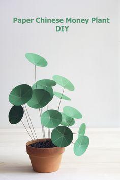 Paper Chinese Money Plant DIY - Planta del dinero de papel