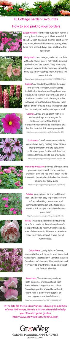 Add a froth of gorgeous pink to your border, these are all easy to grow plants, many are perennials so will become the backbone of a good herbaceous border, sow once and reap the benefits both in their beauty and in the pollinators that they bring to your patch. Included are links to the grow guides from growveg.com.