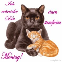 McK Montags GB mit BBCode Animiert und vieles mehr bei You are in the right place about Cat Accessories diy Here we offer you the most beautiful pictures a Betty Boop, I Love Cats, Cute Cats, Cat Nutrition, Image Cat, Vintage Art Prints, Cat Accessories, Cat Drawing, E Cards