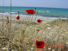 Anzac Cove. A photo I took in 2006. Such an emotional experience.