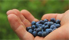 Three heart-healthy blueberry recipes