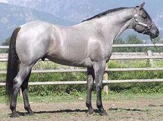 Snip's Silver Legacy (Quarter horse stallion)