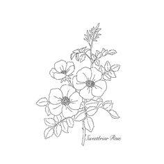 Sweetbriar Rose Wood-mount Stamp Set by Stampin' Up!