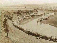 راعي أغنام. جنين، فلسطين. حوالي ١٩٠٠  Shepherd. Jenin, Palestine. 1900  Pastor. Jenin, Palestina. 1900