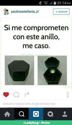 Lo quiero !! O a chat noir