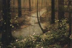 Woods Print - Debbie Carlos Studio