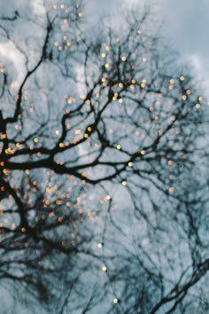 Christmas Lights on Bare Tree