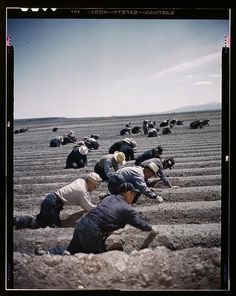 Japanese-American camp, war emergency evacuation, [Tule Lake Relocation Center, Newell, Calif.]