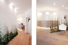 Zahnarztpraxis M2   [lu:p] Architektur GmbH Coburg Clinic Interior Design, Clinic Design, Healthcare Design, Hotel Reception Desk, Reception Design, Dental Office Decor, Dental Office Design, Office Design Concepts, Cabinet Medical