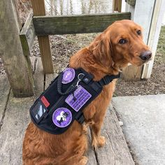 Hot topics, interesting posts and up to date news Psychiatric Services, Psychiatric Service Dog, Service Dog Training, Service Dogs, Service Dog Patches, Military Dogs, Dog Vest, Guide Dog, Dog Agility