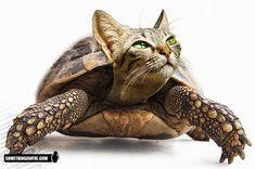 (2011-06) Kitten + turtle = kirtle?