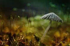 Photograph The wood. by Wil Mijer on Mushroom Fungi, Tiny World, Walk In The Woods, Dandelion, Stuffed Mushrooms, Around The Worlds, Amazing, Flowers, Nature