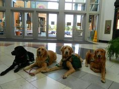 Autism Service Dogs of America - training