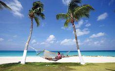 Das ist Karibik pur: Palmen. Wenn es nasskalt wird, dann schnell die Koffer packen und ab zu den Traumstränden in der Karibik. http://www.travelbusiness.at/reisetipps/ab-in-die-karibik-das-trend-reiseziel-im-winter/0012701/