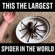 TAG somebody scared of spiders to ruin their day