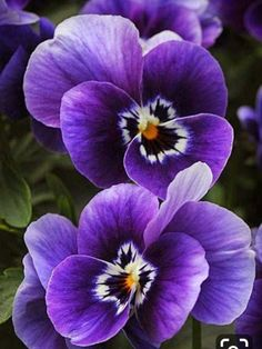 Purple flowers are a great way to add interest to your yard or landscape. See some of our favorite purple garden flowers! Purple flowers purple flowers names purple wedding flowers wedding Amazing Flowers, My Flower, Pretty Flowers, Purple Flowers, Spring Flowers, Exotic Flowers, Violets Flower, Purple Flower Pictures, Purple Flower Centerpieces