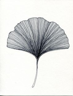 Ginkgo Leaf Print of original Black or Green Pen and Ink Drawing