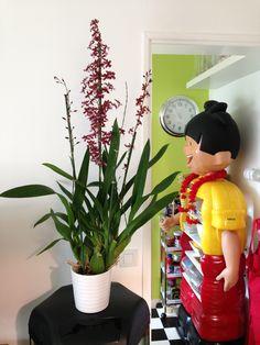 Oncidium Sharry Baby Elf On The Shelf, Orchids, Holiday Decor, Baby, Home Decor, Decoration Home, Room Decor, Baby Humor, Home Interior Design