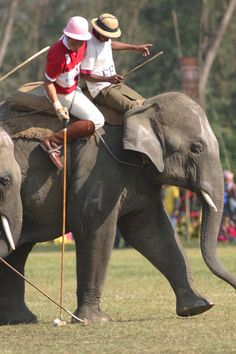 Pachyderms Don't Horse Around When They Play Polo ... #pets #animals ... PetsLady.com