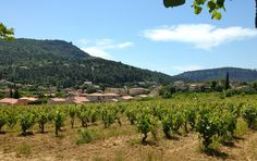 """""""Terroir is the unique quality of the vines' environment..."""""""