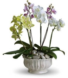 arreglos con plantas orquideas - Buscar con Google
