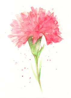 Fine art watercolor painting, flower art, red CARNATION WATERCOLOR PRINT, giclee print, flower interest