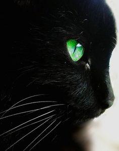 The Amazing World of Cat's Eye Macro Photography
