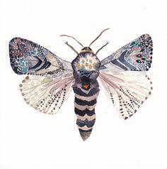 Moth Archival Print by unitedthread on Etsy