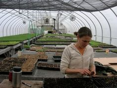 Greenhouse management tips and techniques from a veteran organic farmer.