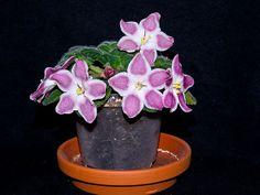 African Violet - Saintpaulia 'Brusnitschnyi Sirop' - Flickr - Photo Sharing!