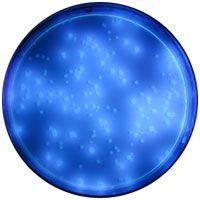 Meios de Cultura Cromogênicos CromoCen® CC – BioCen do Brasil BioClassi