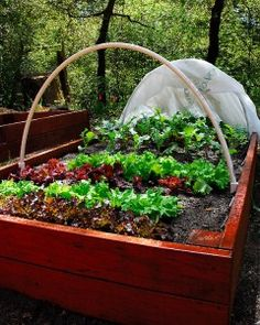 Really want Al to build a few raised beds for our vegie garden. Can't take the weeds anymore.