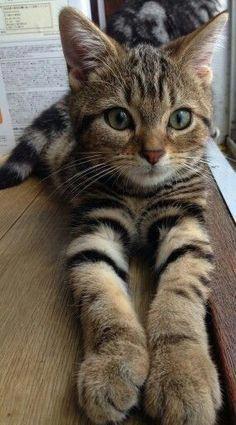HEART BEAT LINE ANIMAL Cat Kitty Rescue Playing Ball Yarn Kitten CAR METAL DECAL